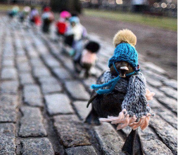 yarnbombed duklings and more knitting news