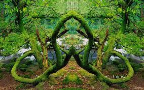 """Résultat de recherche d'images pour """"tropical forest wallpaper"""""""