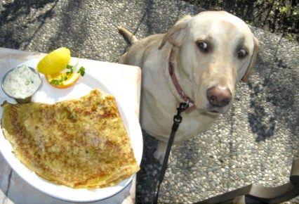 ¿Sera mio,sera para mi?una morditoya no esta de mas #Tentacion#gracioso#comida#perro