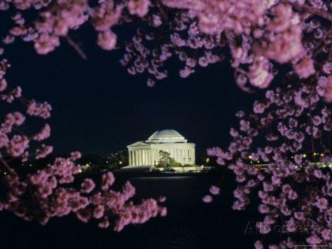 Jefferson Memorial At Night Seen Through Cherry Blossoms Washington D C Photographic Print Kenneth Garrett Allposters Com Jefferson Memorial Cherry Blossom Photographic Print