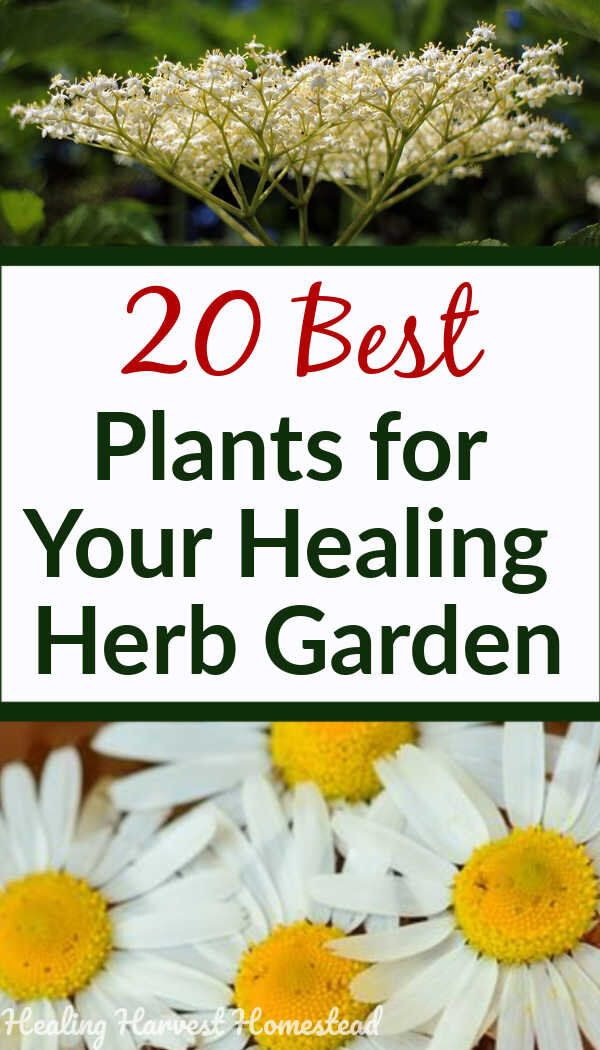 20 Medicinal Herbs to Grow in Your Healing Garden (Make Your Own Herbal Remedies with Plants You Gro