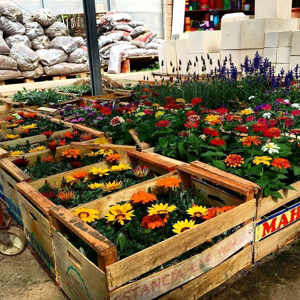 Para las interesadas en plantas y en jardín les pasamos el
