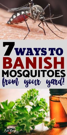 how to keep mosquitoes away from your yard
