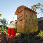 Honey on Tap: A New Beehive that Automatically Extracts Honey without Disturbing Bees