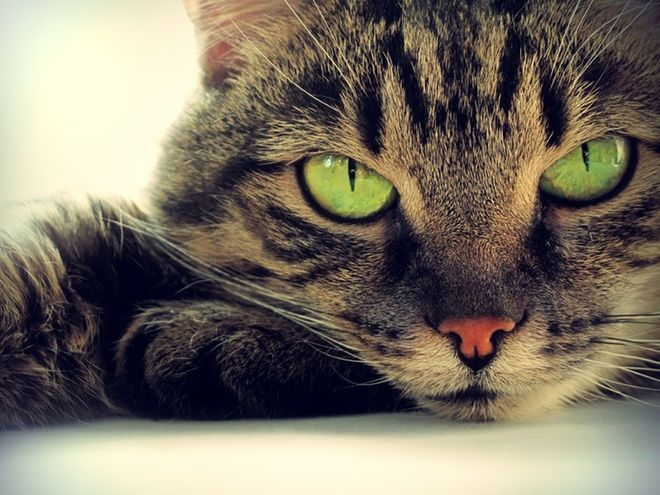 Cats protect your home and you from ghosts and negative spirits