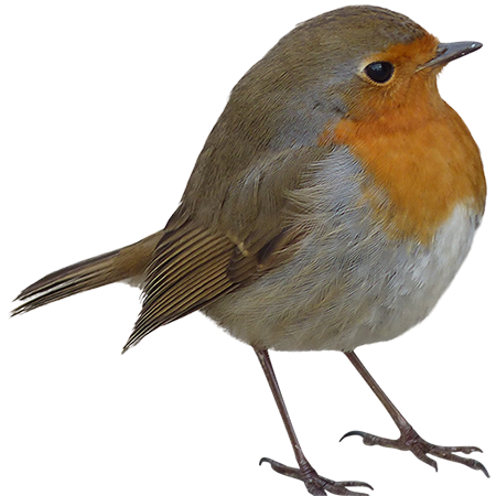 A Rotund Little Orange And Yellow Bird Who Seems To Be Very Pleased With Himself And The General State Of The World Be Like This Bird Animals Images Pet Birds