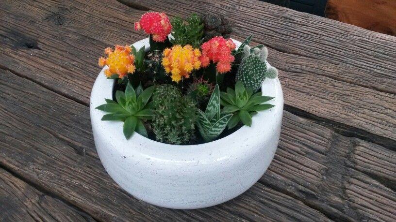 Mini cactus!