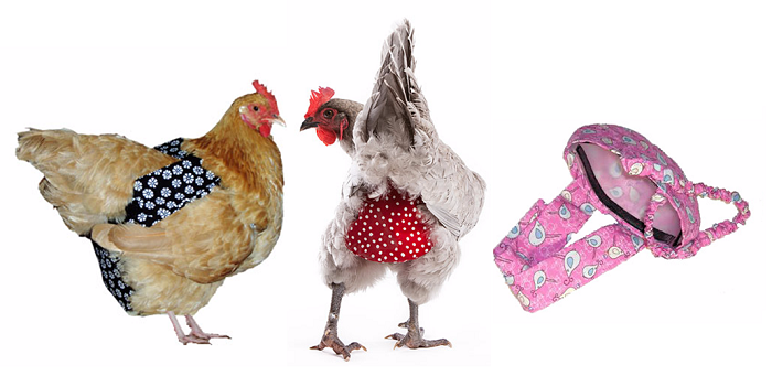 Crazy Chicken Stuff Diapers Harnesses And Costumes Chicken Diapers Chickens Backyard Chickens