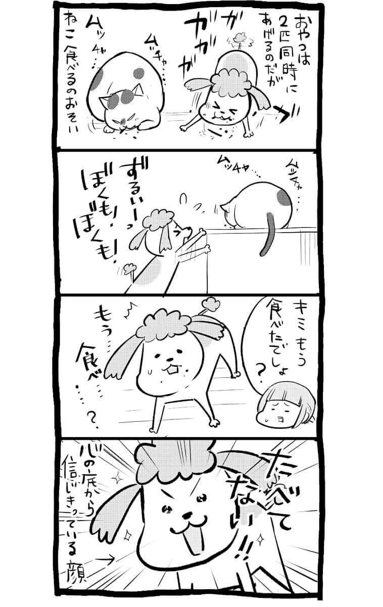犬や猫を飼ってると時々かまれたりもする 犬と猫どっちも飼ってる松本ひで吉さん ほぼ日刊イトイ新聞 松本ひで吉 犬 猫 漫画 猫 漫画