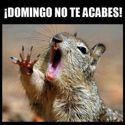 Imagenes De Dias De La Semana Chistosas Google Search Squirrel Funny Funny Animals Squirrel Memes