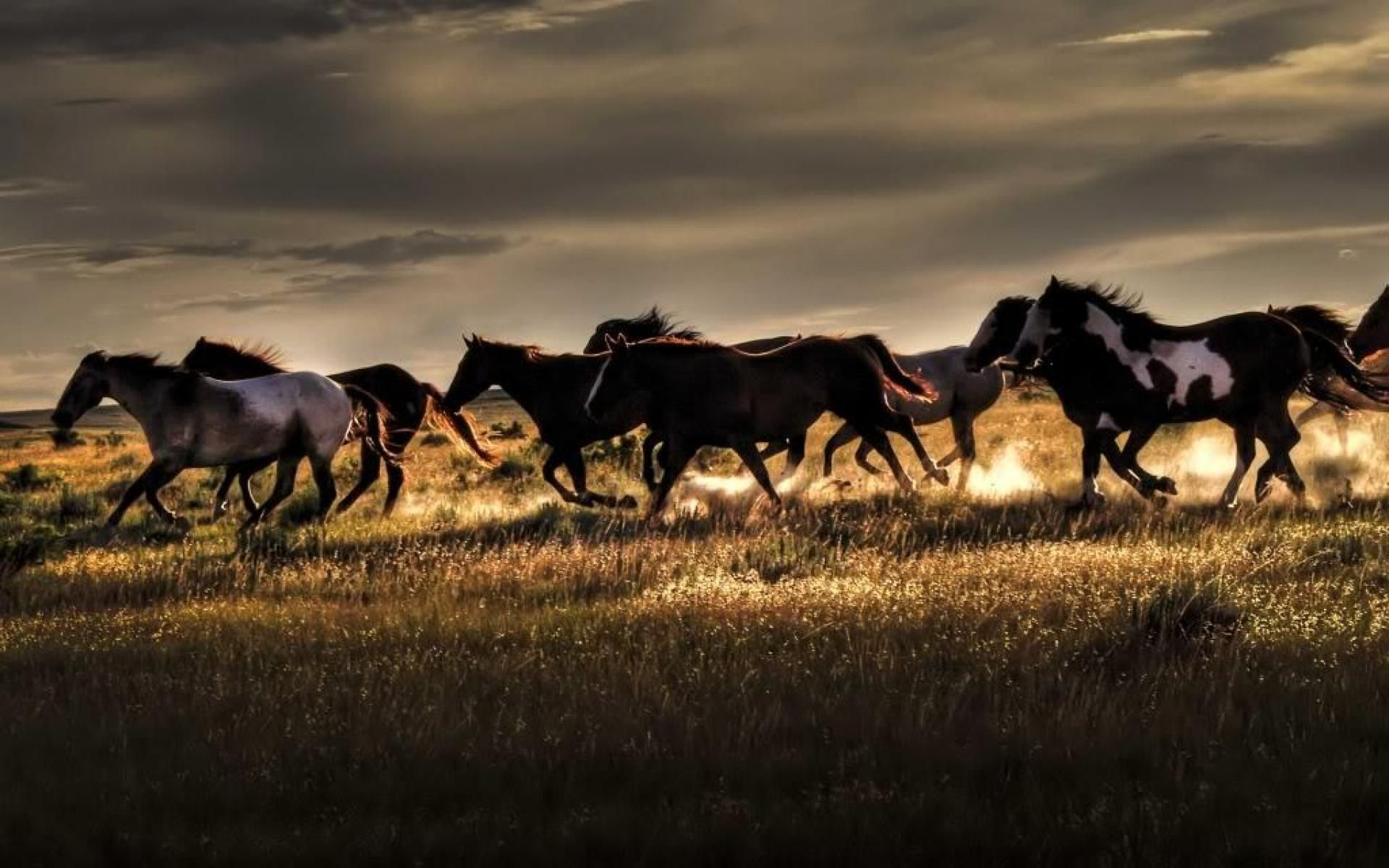wild horses wide full hd wallpaper jpeg grafik 1920 a— 1200