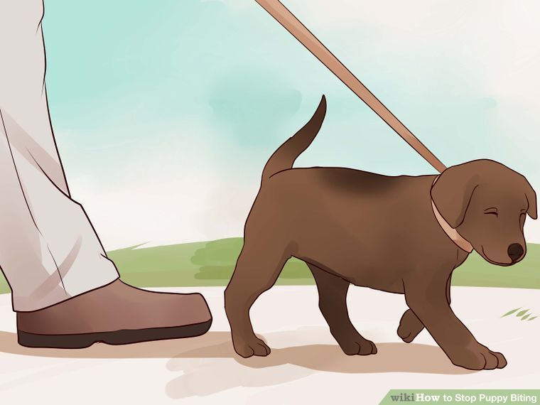 Cat Training Biting 3 Ways To Stop Puppy Biting Wikihow How To