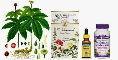 Golden Seal - Herbs for Dogs and Cats In this article    1