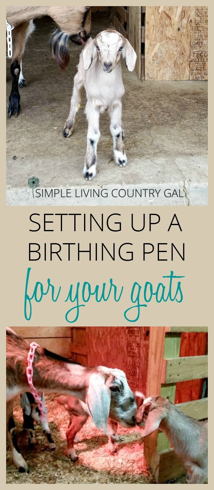 having a separate area for your goats to kid is important for not only the safety of the kids but the safety of the mother as well.  Setting up is simple and straightforward once you know all that you need. via /SLcountrygal/
