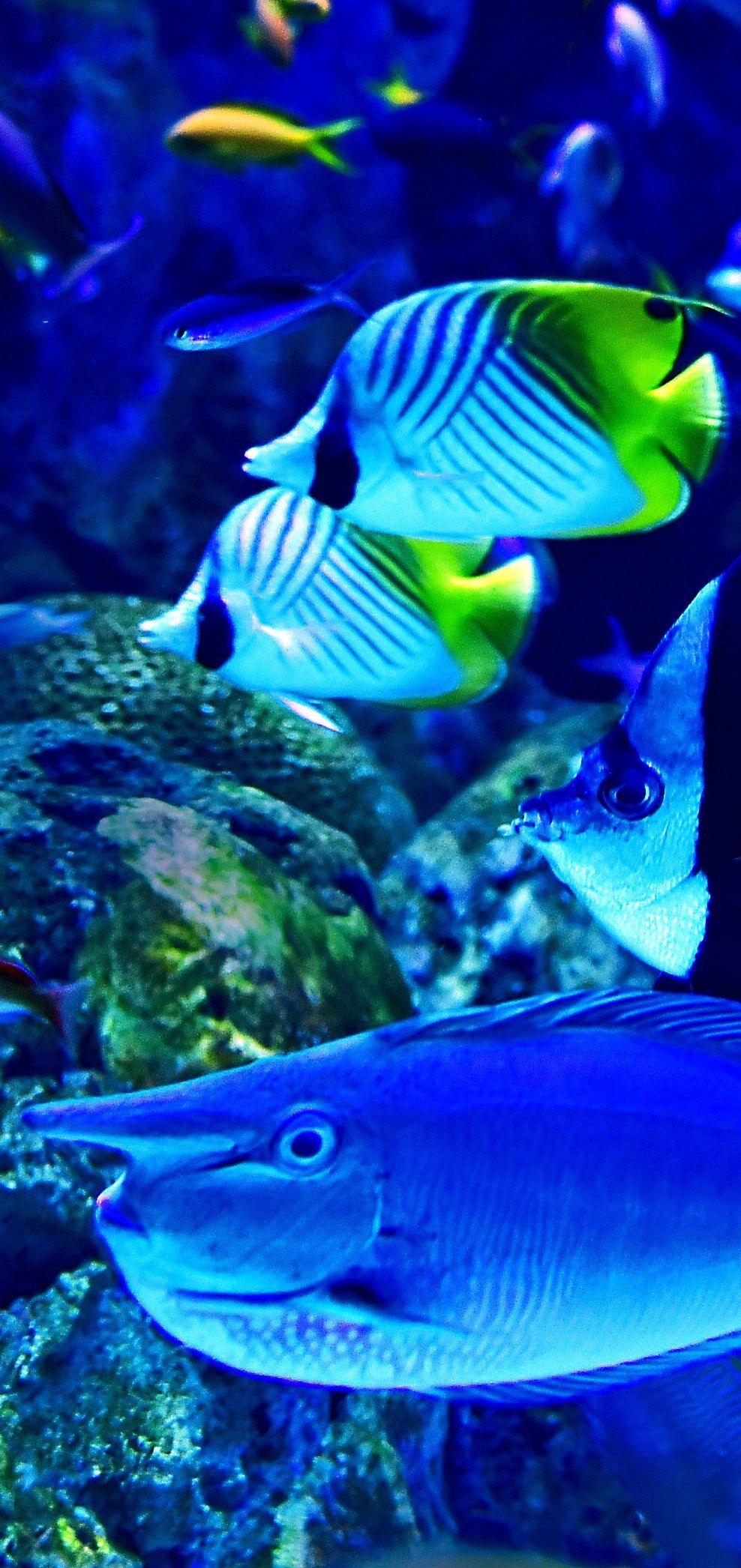 14 Top Aquariums In The USA | Aquarium, Fish pet ...