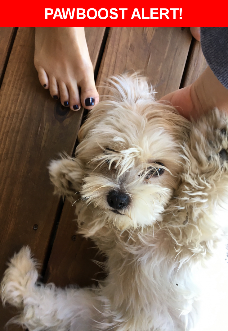 Found In Kansas City MO 64110 Please Spread The Word So We Can Find Owner Description Female 6 8 Months Probably Shih Tzu Nearest Address 71 Hwy