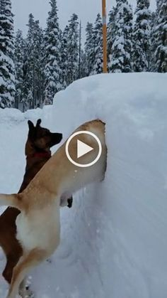 birdap on in 2020 (With images) Funny dog videos, Cute