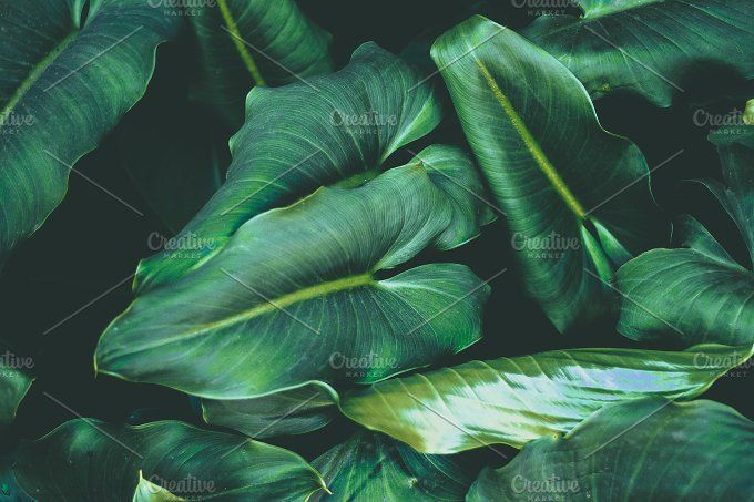 Lush Tropical Jungle Leaves Nature Photography Leaf Photography Nature Photos Silhouettes of evergreen compound leaves, different shapes, leaves made of thin curved lines. lush tropical jungle leaves nature