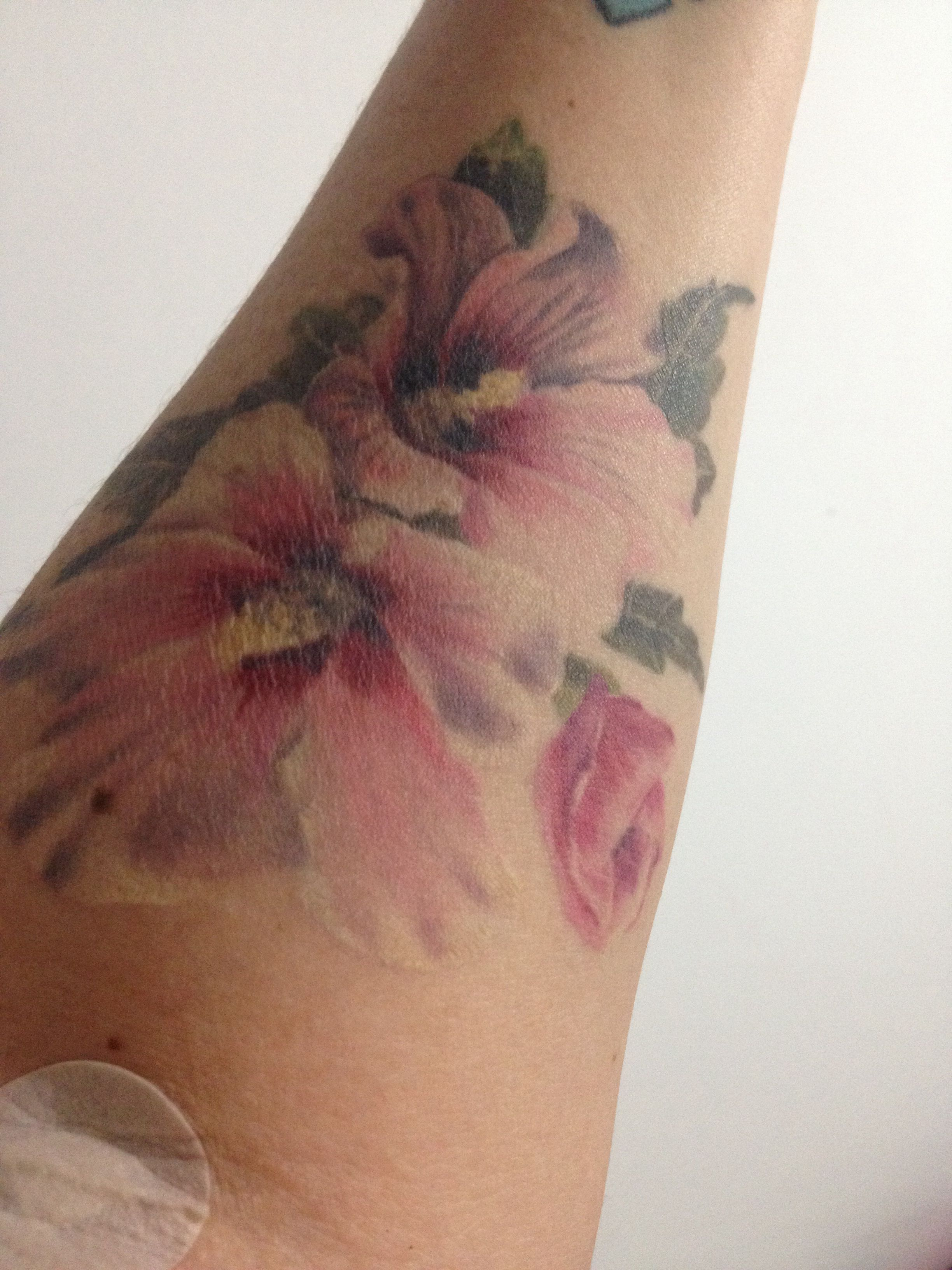 e7c619c81 Rose of Sharon Rose Of Sharon, Body Modifications, Watercolor Tattoo,  Tatting, Skin