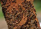 Pesticide blamed for declining bee population