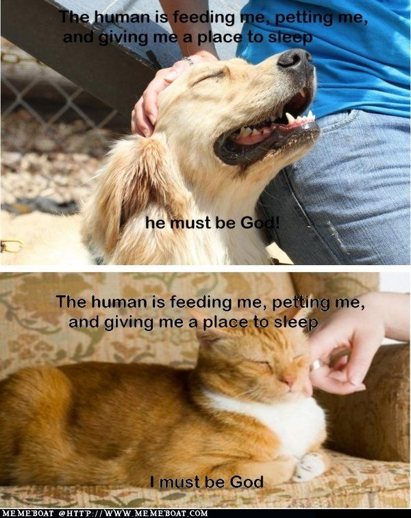 The Difference Cat Vs Dog Cat Quotes Funny Funny Cat Memes