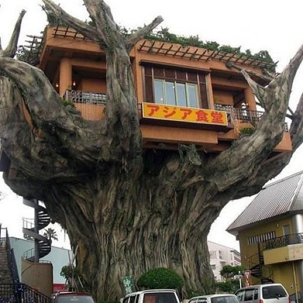 This Ecuadorian Mansion Comes With A Ridiculously Cool: Boomhutten, Boomhut En Huizen