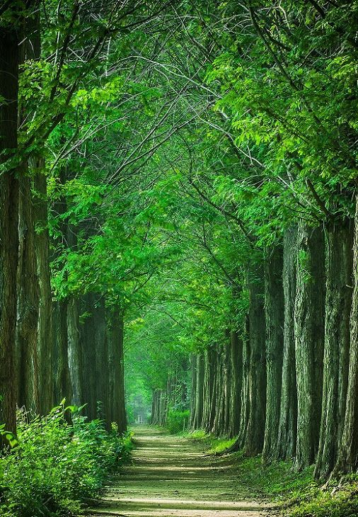 Green Tree 6 By H R An 40d Art Color Forest Green Korea Rock101 Beautiful Places Nature Beautiful Nature Beautiful Nature Wallpaper