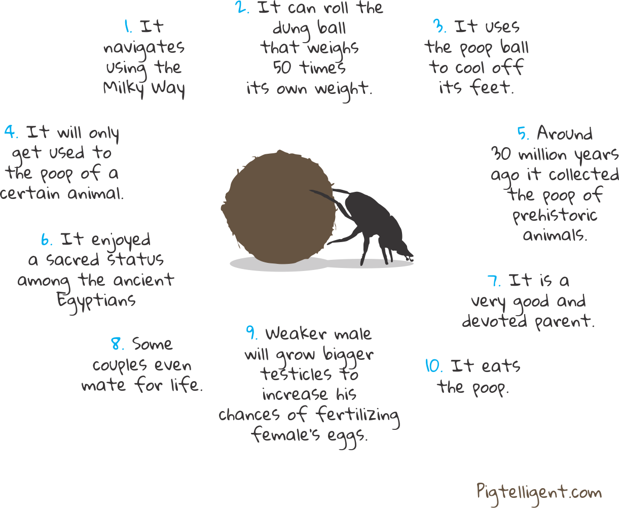 10 Amazing Facts About The Dung Beetle Insect