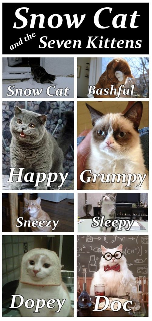Snow Cat and the Seven Kittens! Kittens funny, Cats and