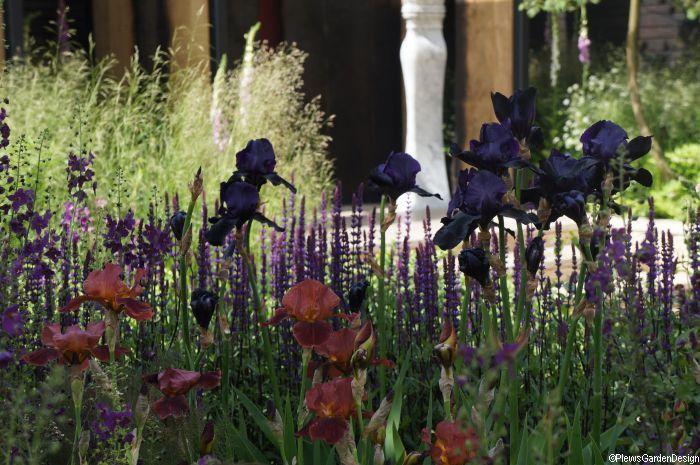 iris in cloudy bay sensory garden chelsea 2014