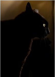 Scaredy Cat Folklorethursday Cats African Proverb Folklore