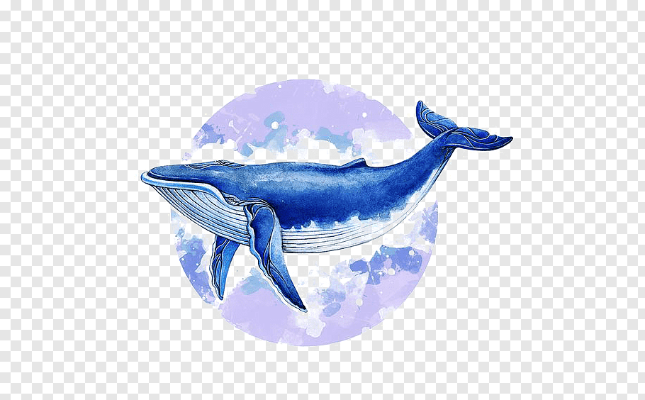 Humpback Whale Illustration Blue Whale Baleen Whale Illustrator Illustration Watercolor Whale Free Png Blue Whale Drawing Whale Illustration Watercolor Whale