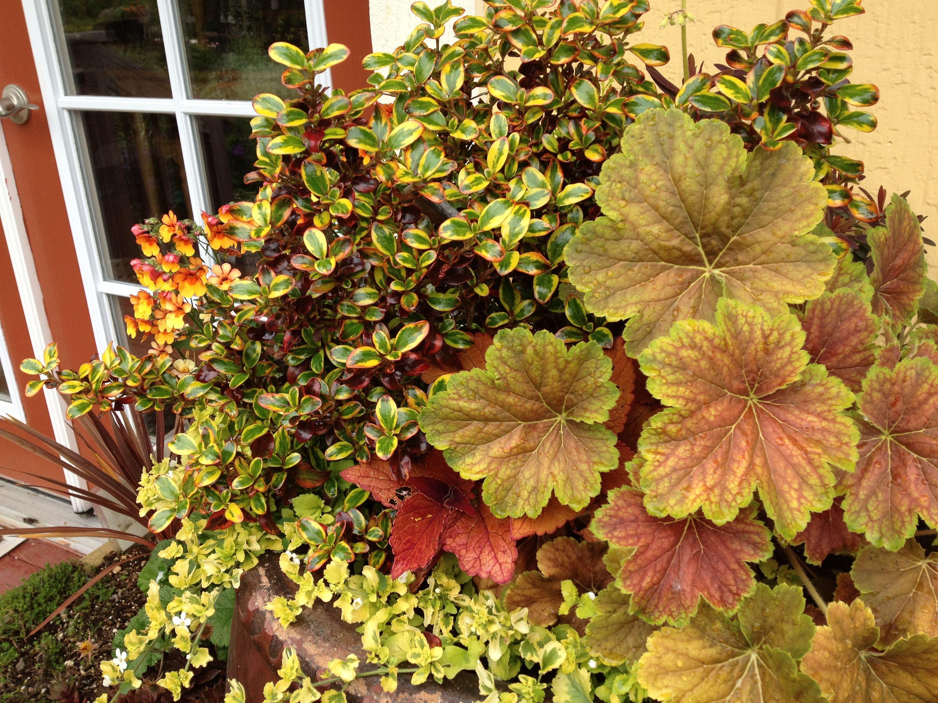 Funky Gardens At Monroe Ideas - Brown Nature Garden ...
