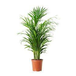 pots et plantes extrieur cache pots pour extrieur ikea - Plantes De Terrasse Exterieur