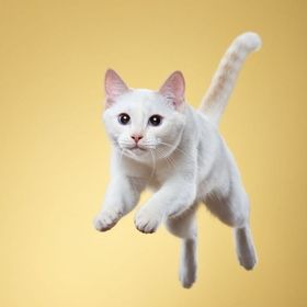 frank pham / 500px  jumping cat dancing cat cat pose