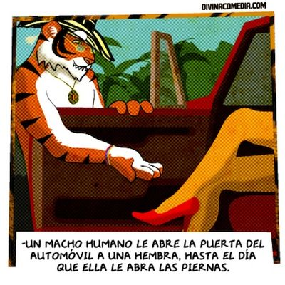 ABRIENDO PIERNAS | #Caballerosidad #Sexo #Tigre