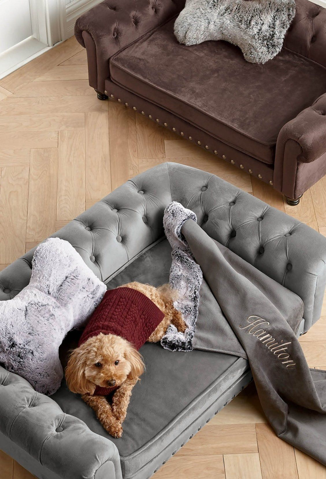 Pin On Pampered Pets