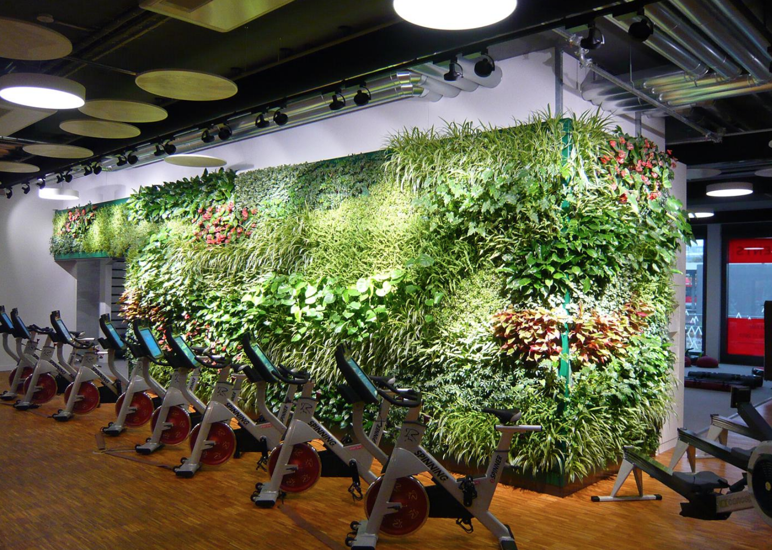 Gorgeous Mobilane Green Wall In A Gym Setting Green Walls Are So Versatile Green Wall Design Green Wall Plant Wall