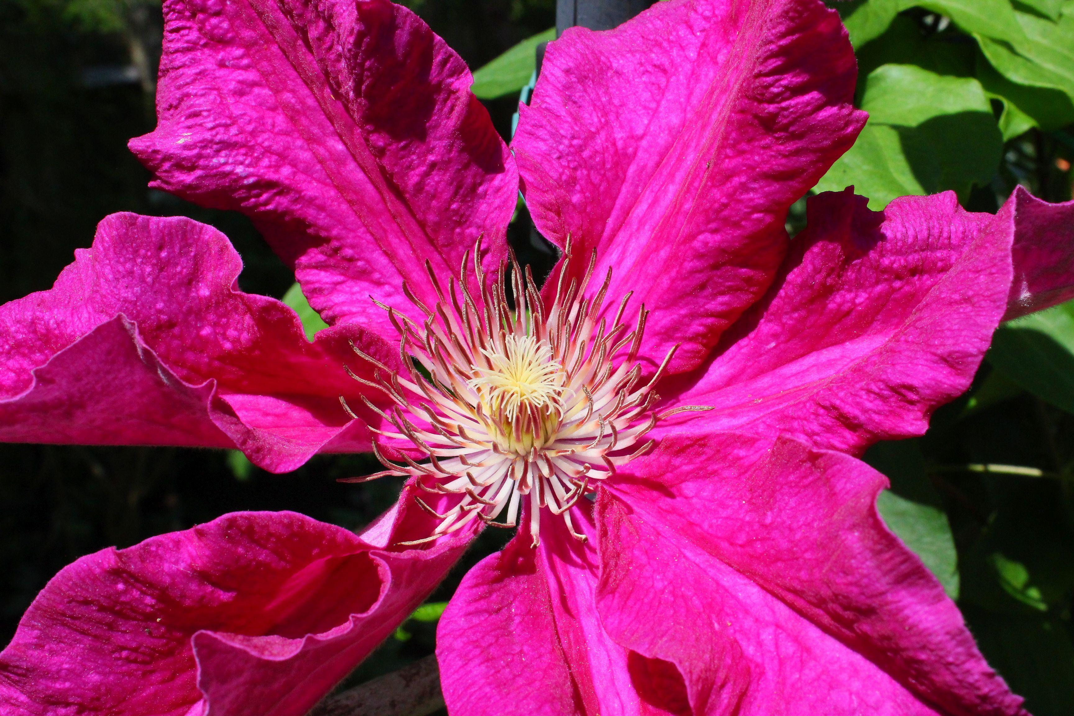 Pin by lynn vos on flowers pinterest flowers