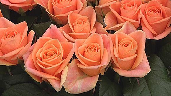 Timo Koskinen Lepaalta neuvoo, miten ruusut säilyvät pitempään. // Timo Koskinen from Lepaa tells how to preserve the roses longer (in Finnish).