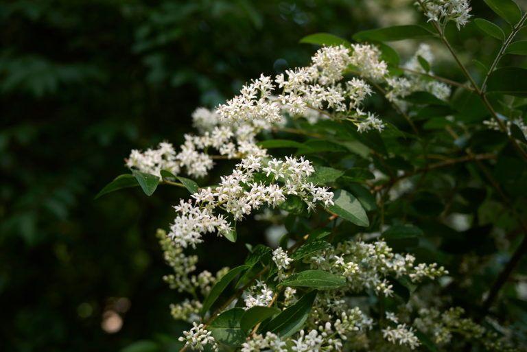 Bienenfreundliche Straucher Top 15 Bienenstraucher Bienenfreundliche Straucher Bienenfreundliche Pflanzen Pflanzen