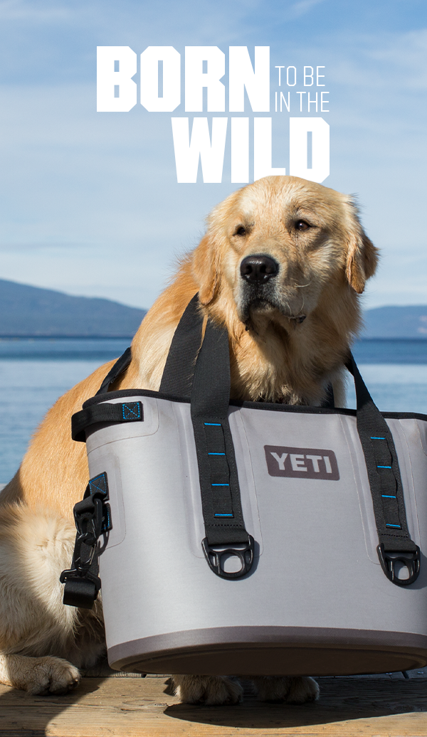 The wild is calling and your best friend is ready. Where