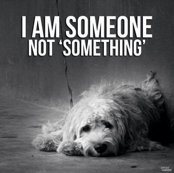 Animal Rights Quotes Pinleonie Esterhuizen On Pet 101  Pinterest  Dog Animal And