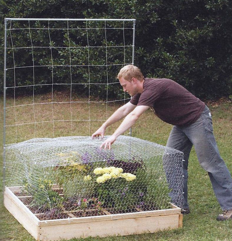 garden cages Chicken Wire Garden Cage outdoors landscaping