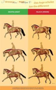 Tässä kuvasarjassa näkyy ravin diagonaaliparien toiminta erilaisissa muodoissa…