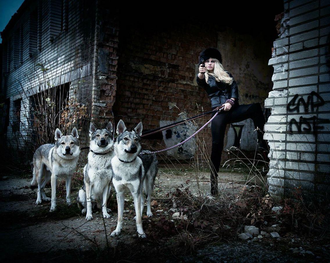 Foto s vlky