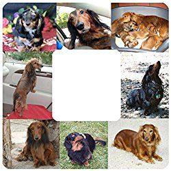 Dachsund Long Hair Dog Breed Picture Photo Frame Photo Unique