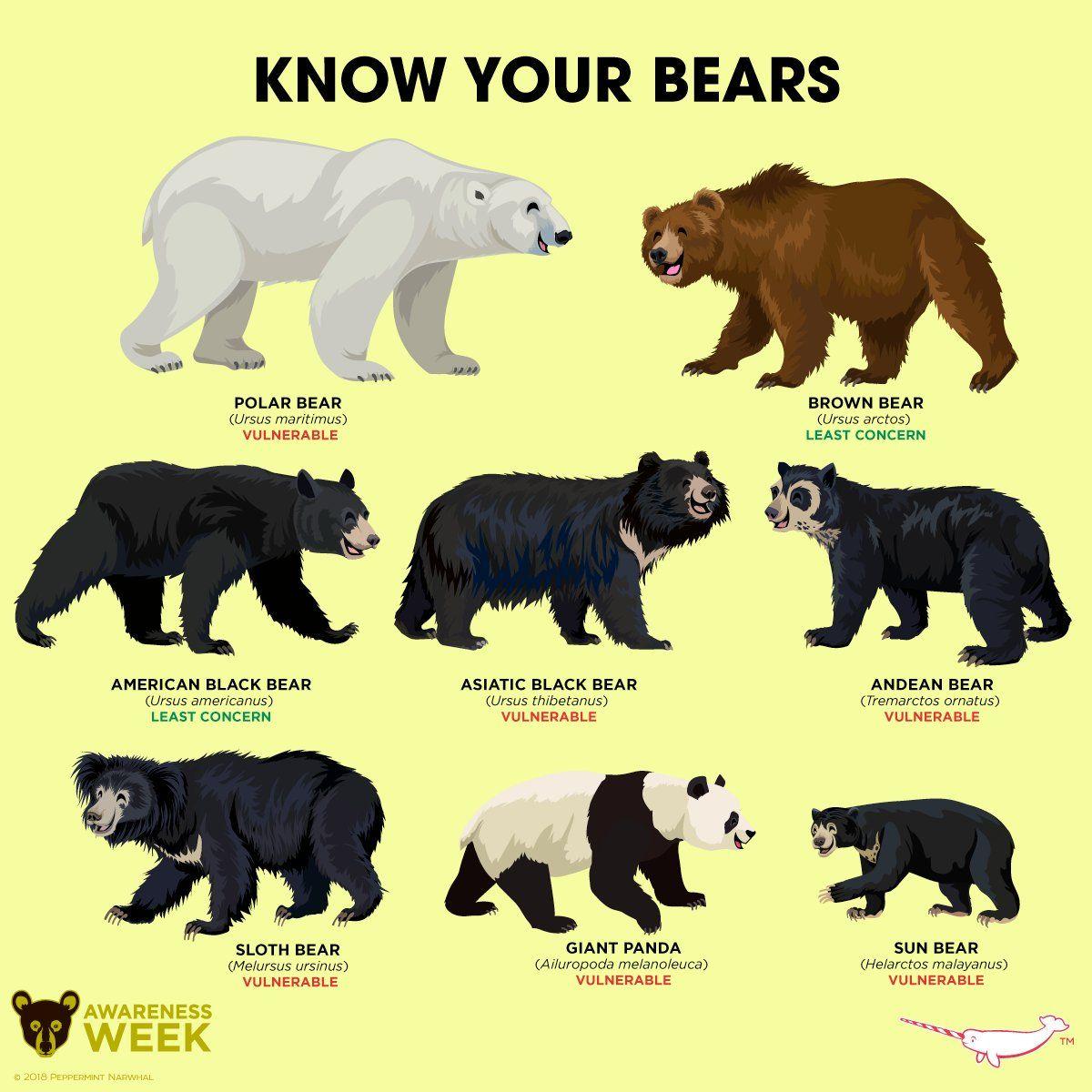 Types Of Bears Google Search Animals Information Animal Species Animals Wild