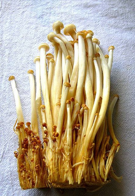 brown enoki mushrooms | Stuffed mushrooms, Edible mushrooms ...