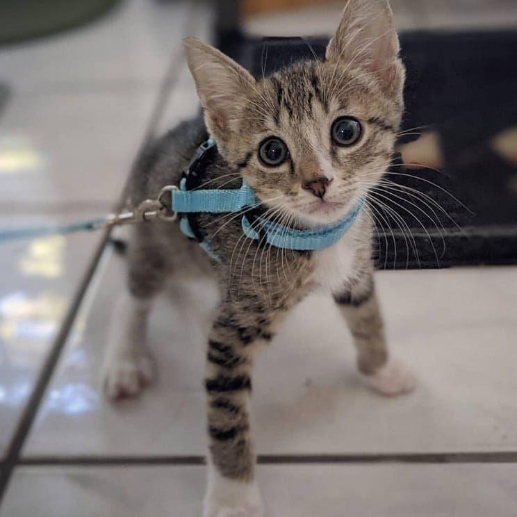 Follow Kittiesofourworld For More Cat Day Animals Kittens Cutest